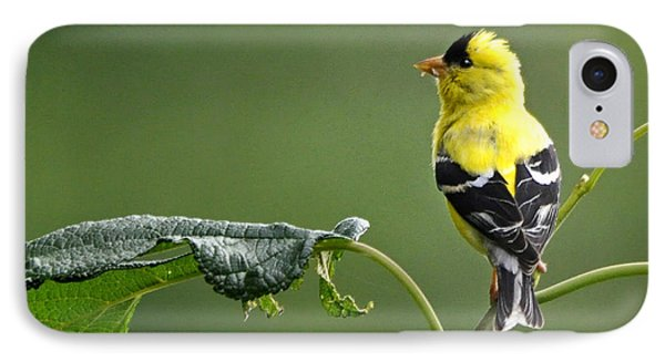 IPhone Case featuring the photograph Yellow Finch by Nava Thompson