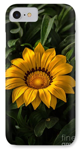 Yellow Gazania IPhone Case by Robert Bales