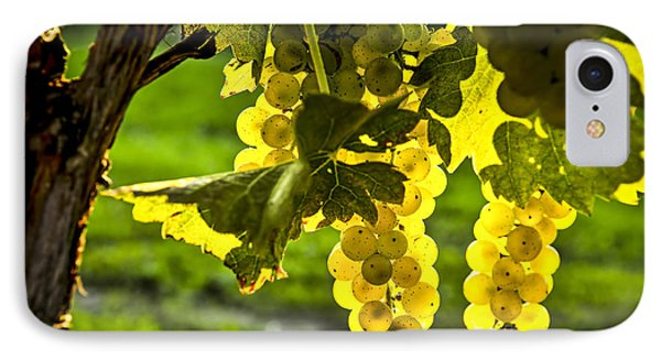 Yellow Grapes In Sunshine Phone Case by Elena Elisseeva