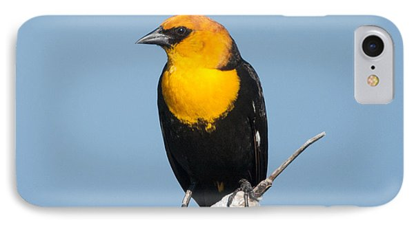 IPhone Case featuring the photograph Yellow Headed Blackbird by Jack Bell