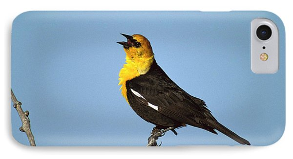 Yellow-headed Blackbird Singing IPhone Case by Tom Vezo