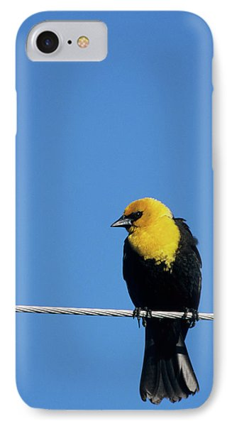Yellow-headed Blackbird (xanthocephalus IPhone Case