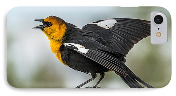 IPhone Case featuring the photograph Yellow-headed Blackbird by Yeates Photography
