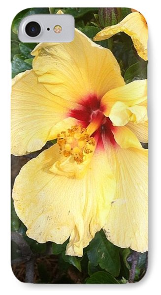 Yellow Hibiscus IPhone Case by Nance Larson