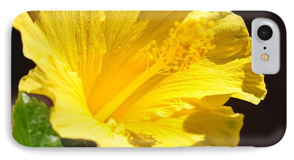 Yellow Hibiscus Open To The Sun IPhone Case by Jay Milo
