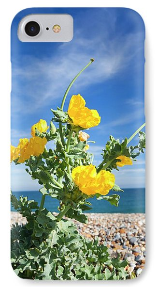 Yellow Horned Poppy (glaucium Flavum) IPhone Case by Ashley Cooper