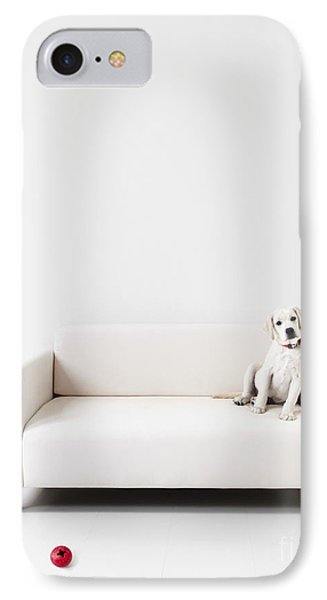 Yellow Lab In A White Room IPhone Case by Diane Diederich