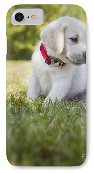Yellow Lab Puppy In The Grass IPhone Case by Diane Diederich
