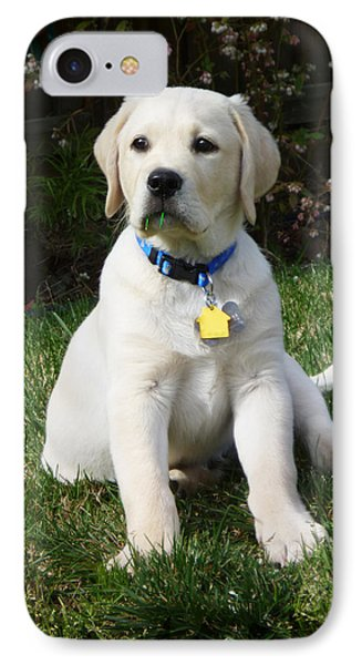 Yellow Lab Puppy Standing Guard  IPhone Case by Irina Sztukowski