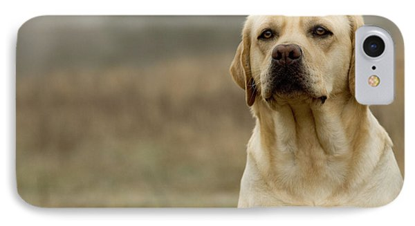 Yellow Labrador IPhone Case by Jean-Michel Labat