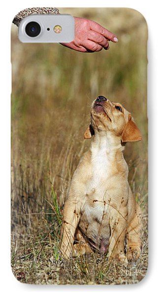 Yellow Labrador Retriever Puppy Looking At Hand IPhone Case by Dog Photos