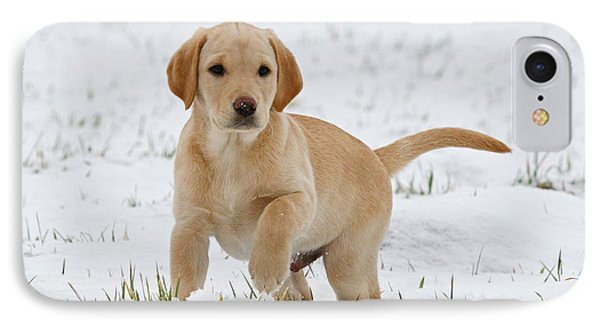 Yellow Labrador Retriever Puppy Standing In Snow Raising Its Paw IPhone Case by Dog Photos