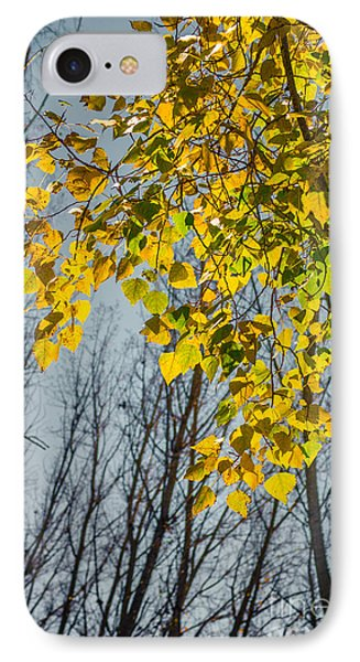 Yellow Leaves IPhone Case by Carlos Caetano