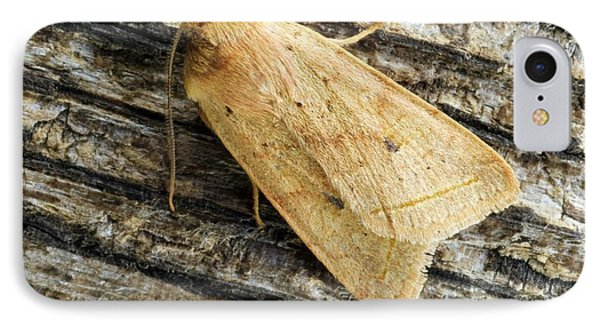 Yellow Line Quaker Moth IPhone Case by David Aubrey