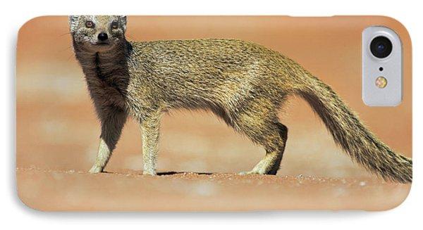 Yellow Mongoose In Kalahari Desert IPhone Case by Heike Odermatt
