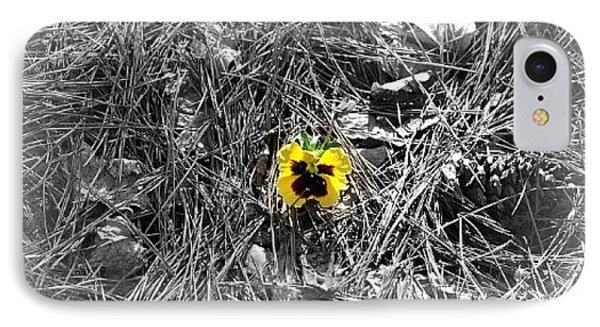 IPhone Case featuring the photograph Yellow Pansy by Tara Potts