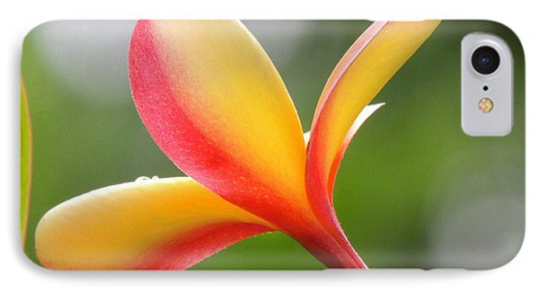 Yellow Pink Plumeria IPhone Case by Kristine Merc