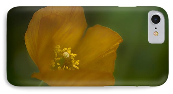 Yellow Poppy IPhone Case by Jacqui Boonstra