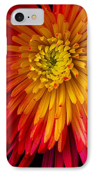 Yellow Red Spider Mum IPhone Case by Garry Gay