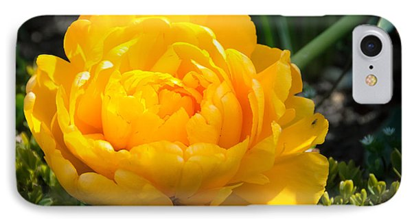 IPhone Case featuring the photograph Yellow Rose by Dee Dee  Whittle