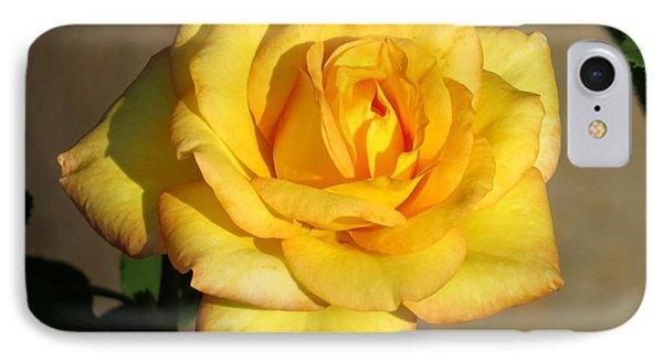 Yellow Rose I IPhone Case by Zina Stromberg