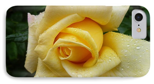 Yellow Rose Say Goodbye IPhone Case by Lingfai Leung