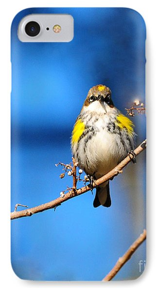 Yellow-rumped Warbler IPhone Case by Olivia Hardwicke