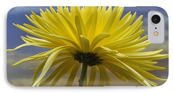 Yellow Spider Chrysanthemum IPhone Case by Terence Davis
