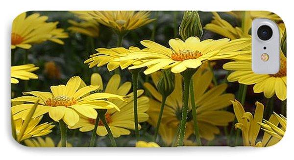 Yellow Splendor IPhone Case by Bruce Bley