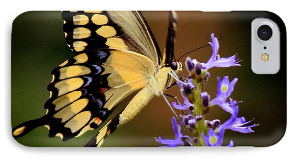 Yellow Swallowtail IPhone Case by Joseph G Holland