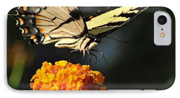IPhone Case featuring the photograph Yellow Swallowtail by Kelly Nowak