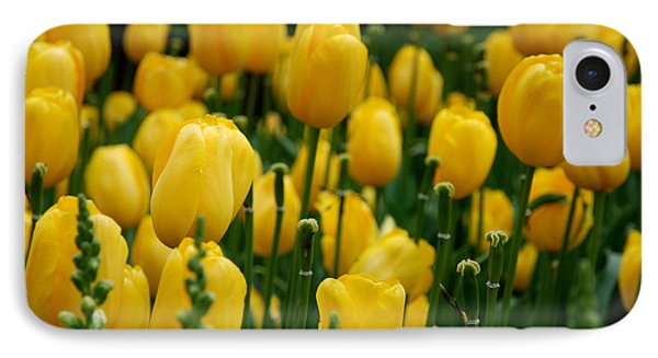 Yellow Tulip Sea IPhone Case by Jennifer Ancker