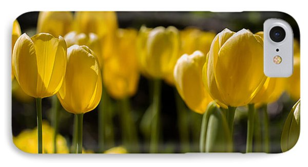 Yellow Tulips On Parade IPhone Case