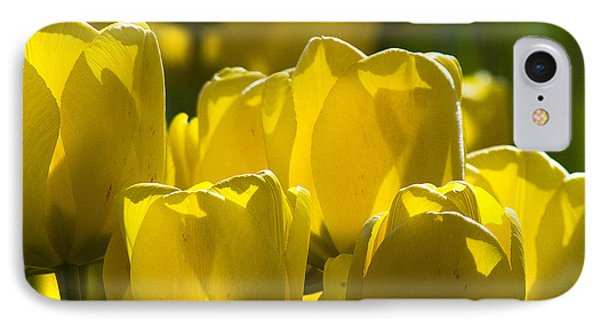 Yellow Tulips  IPhone 7 Case
