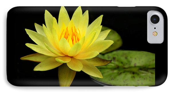 Yellow Water Lily IPhone Case by Elizabeth Budd