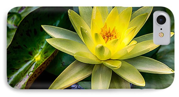 Yellow Water Lily IPhone Case