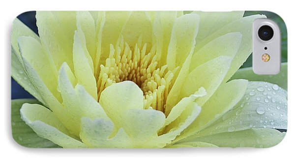 Yellow Water Lily Nymphaea Phone Case by Heiko Koehrer-Wagner