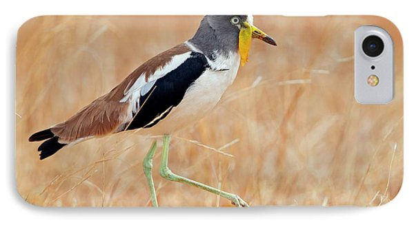 Yellow-wattled Lapwing IPhone 7 Case by Bildagentur-online/mcphoto-schaef