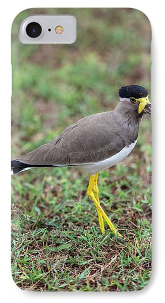 Yellow-wattled Lapwing IPhone 7 Case by Peter J. Raymond