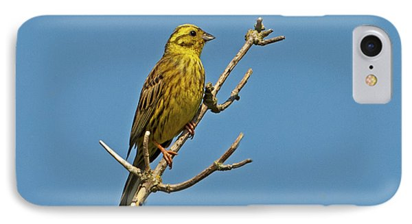 IPhone Case featuring the photograph Yellowhammer by Paul Scoullar