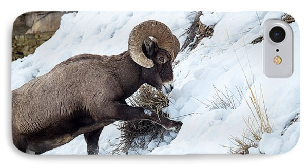 Yellowstone Bighorn IPhone Case