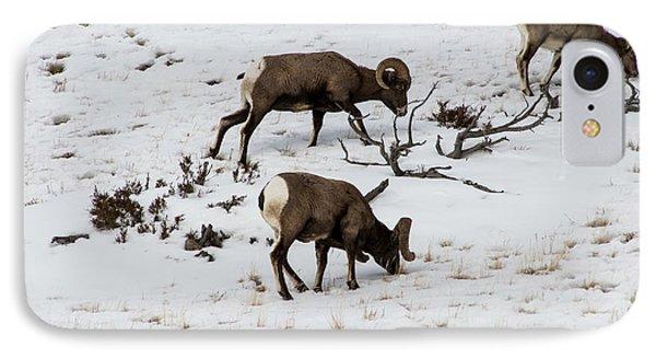 Yellowstone Sheep IPhone Case