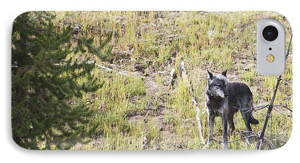 IPhone Case featuring the photograph Yellowstone Wolf by Belinda Greb