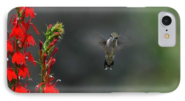You Looking At Me IPhone Case by Judy Wolinsky