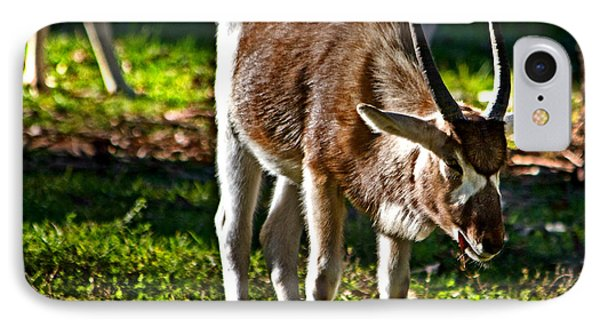 Youngster Addax IPhone Case by Miroslava Jurcik