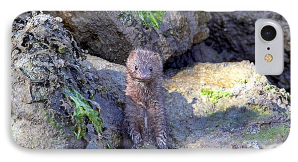 IPhone Case featuring the photograph Young American Mink by Peggy Collins