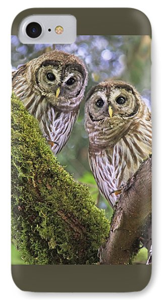 Young Barred Owlets  IPhone Case by Jennie Marie Schell