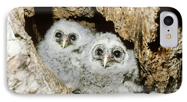 Young Barred Owls In Nest Snag Phone Case by Jim Zipp