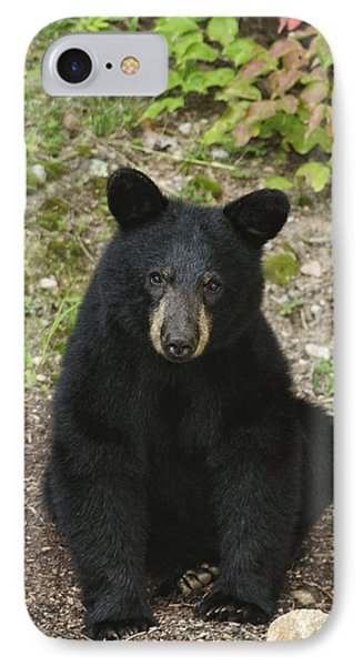 Young Bear 1 IPhone Case
