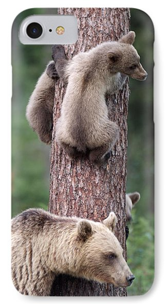 Young Bears Clinging To Tree IPhone Case by John Daniels